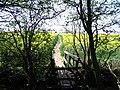 Footpath through oilseed rape - geograph.org.uk - 401813.jpg
