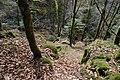 Forêt @ Alex (51097634219).jpg