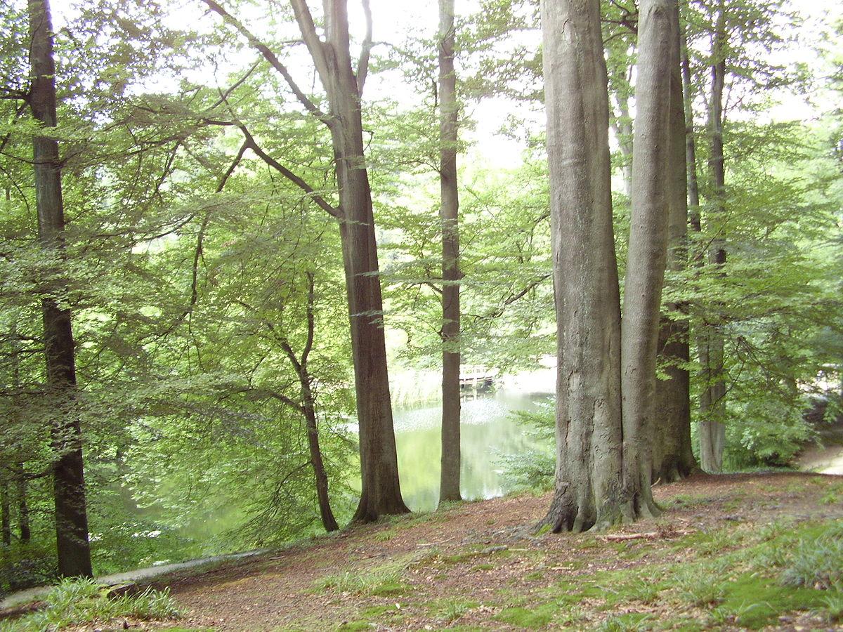 Bosques templados de frondosas y mixtos  Wikipedia la