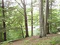 Forêt de Soignes 05.JPG