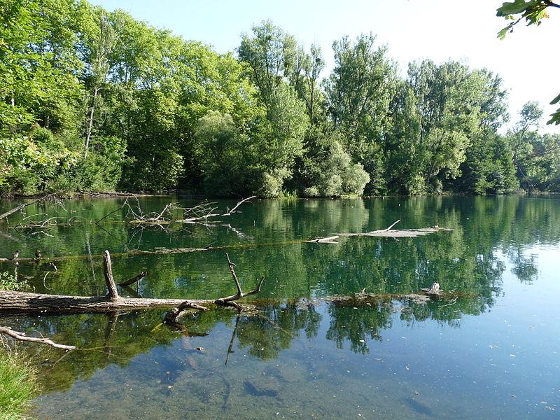 File:Forêt de la Robertsau-Karpfenloch (1).JPG