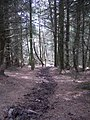 Forest, Meigle Hill - geograph.org.uk - 504086.jpg