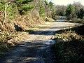 Forest Tracks - geograph.org.uk - 1159186.jpg