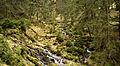 Forest in Góry Bialskie.jpg