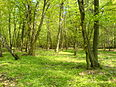 Image: Forest nature reserve Grady nad Moszczenica2, Poland, 6 May 2006.JPG (row: 22 column: 19 )