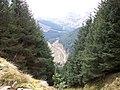 Forestry Near Loch Goil - geograph.org.uk - 1398007.jpg