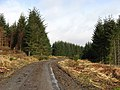 Forestry road - geograph.org.uk - 743362.jpg