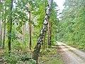 Forst Grunewald - Waldweg (Woodland Path) - geo.hlipp.de - 41379.jpg