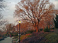 Fort Tryon Park Heather Gardens-1.jpg