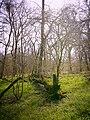 Frühling im Lödderitzer Forst 2.jpg
