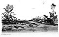 Frogs; from Roesel von Rosenhof; 1758 Wellcome L0001698.jpg