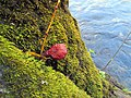 Fungi South Toe River Celo Camp NC 4282 (24096489238).jpg