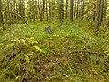 G. Novouralsk, Sverdlovskaya oblast', Russia - panoramio (149).jpg