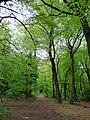 GOC Tring & Wendover Woods 023 Northill Wood, Buckland (33947203543).jpg