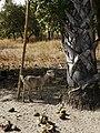 GambiaMakasutu007 (12234999404).jpg