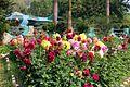 Garden full of flowers.jpg