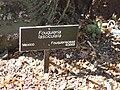 Gardenology.org-IMG 0434 hunt07mar.jpg