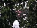 Giardino d'inverno - panoramio.jpg