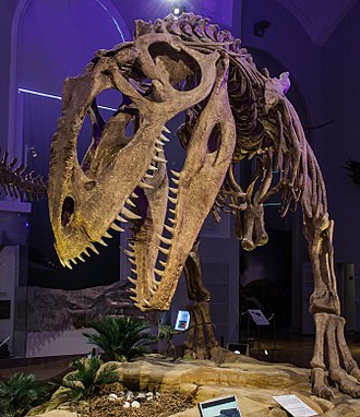 Giganotosaurus - Reconstructed skeleton, Natural History Museum, Helsinki