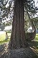 Glasnevin Cemetery - (442807379).jpg