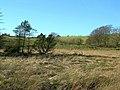 Glenluie Marsh - geograph.org.uk - 328648.jpg