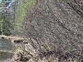 Gmina Narol, Poland - panoramio (16).jpg
