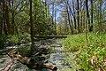 Graben am Rand des Kaltenhofer Moors im Frühling 9933.jpg