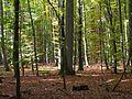 Gramschatzer Wald mit seiner typischen Laubwald-Prägung Foto 2007 Wolfgang Pehlemann Wiesbaden DSCN3168.jpg
