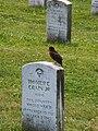 Grave Gettysburg with bird.jpg