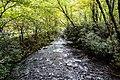 Great Smoky Mountains National Park (e72fcfaf-e01c-4d5c-8404-3dd5b72346d6).jpg