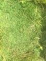 Green Grass 002.jpg