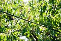 Green bird 02.jpg
