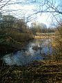Großedlinger Teich im März.jpg