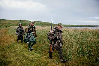 Waterfowl hunting - Three waterfowl hunters donned in camouflage and armed with shotguns.