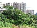 HK 香港南區 Southern District PFL Pokfulam 薄扶林道 Pok Fu Lam Road view Mount Davis September 2019 SSG 12.jpg