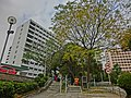 HK King's Park 伊利沙伯醫院 Queen Elizabeth Hospital Road 普通科護士訓練學校 School of General Nursing Jan-2013 trees.JPG
