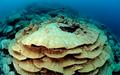 Habitats at Kingman Reef - Peerj-81-fig-2A.png