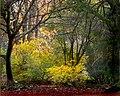 Hagley Park New Zealand. (20) (8069602403).jpg