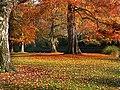 Hagley Park New Zealand. (4) (8069626569).jpg