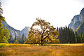 Half Dome elm center fused.jpg