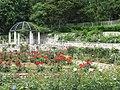Hanahakukinenkoen Rose Garden.jpg