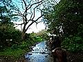 Hawaii Big Island Kona Hilo 229 (6879038626).jpg