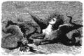 Hawthorne - Le Livre des merveilles, première partie, trad. Rabillon, 1858, illust 03.png