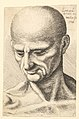 Head of a bald, sinewy man looking downwards MET DP823715.jpg