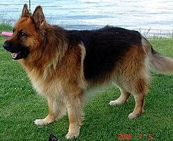 Dog Training Kings Mountain Nc