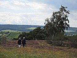 Heidelandschaft Rheinhessen bei Neu-Bamberg.jpg