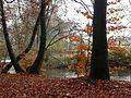Herbst an der Dhünn.jpg