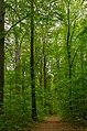 Herrnhut Naturschutzgebiet Hengstberg 06.jpg
