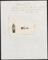 Heterodon rhinostoma - kop - 1837 - Print - Iconographia Zoologica - Special Collections University of Amsterdam - UBA01 IZ12000237.tif