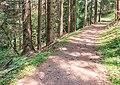 Hiking path in Morzine (2).jpg